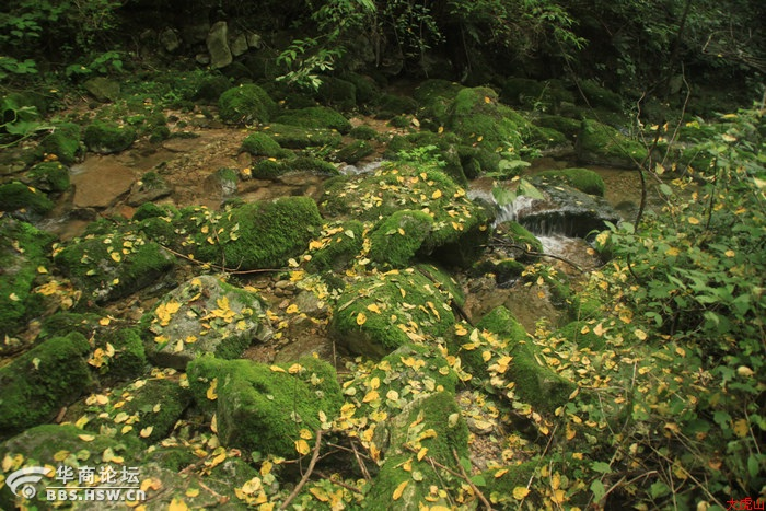 到翠华山翳芳湲生态休闲观光区亲身体验山的气魄与水的灵犀 - 翠华山 - 翠华山的博客