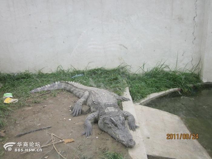 主题 动物冬眠了 高清图片