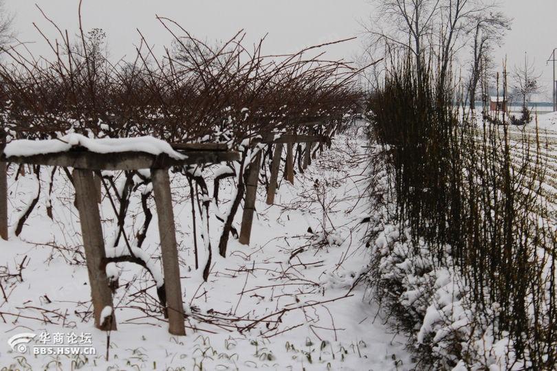 雪后的农村图片