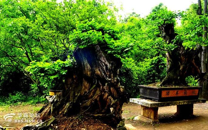 黄果树盆景园值得一游