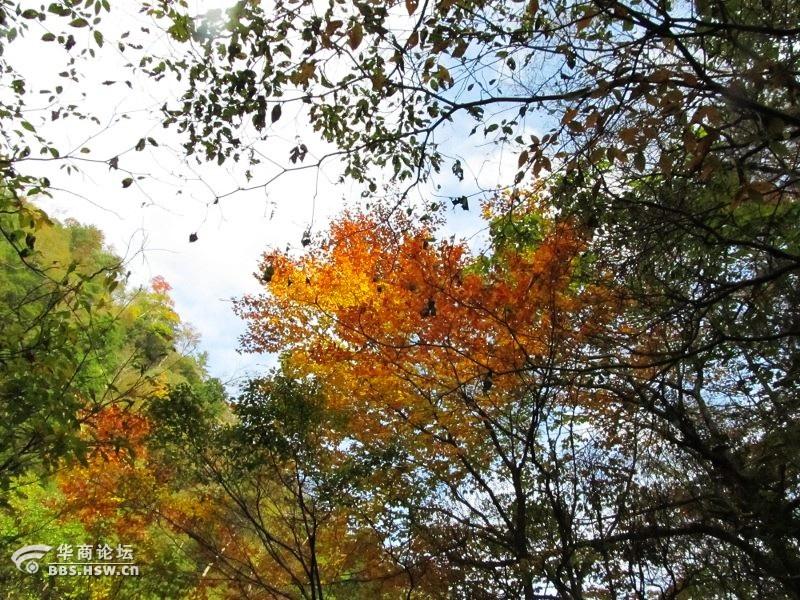 黎坪 我的秋之恋 二 色彩的森林