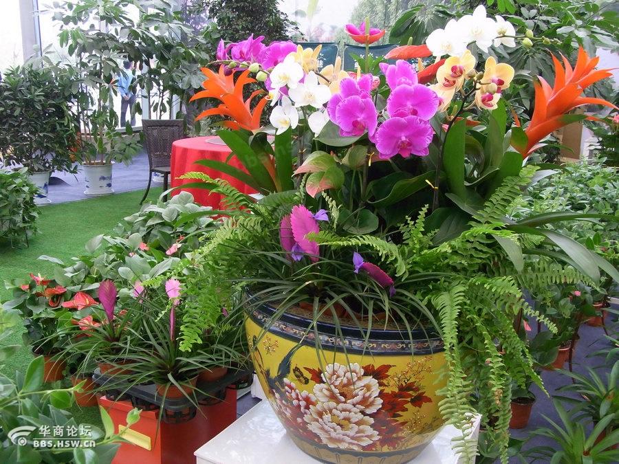 花卉博览会,赏盆景赏花草,赏奇石赏根雕