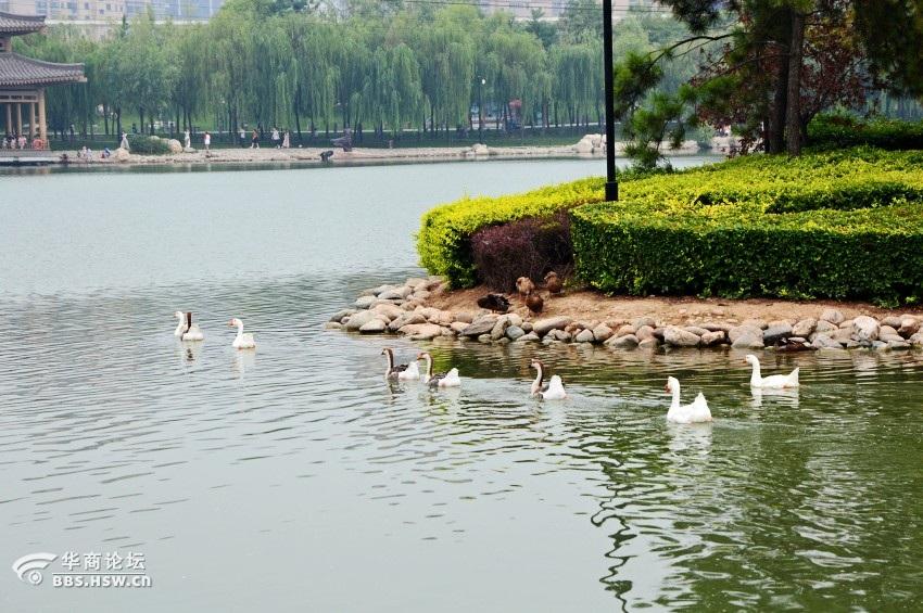 西安/描述:唐城公园7.jpg