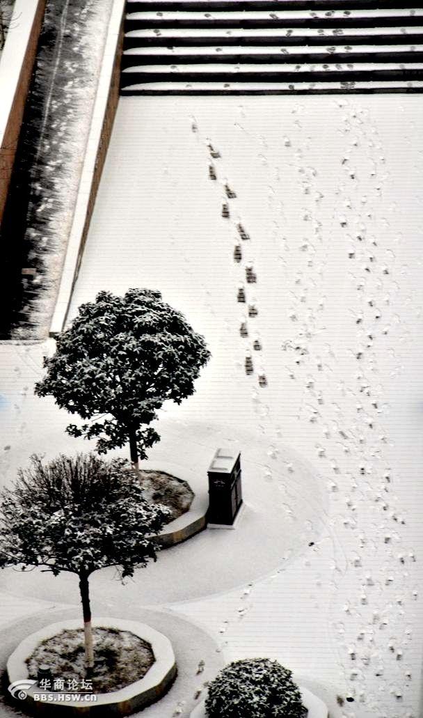 雪绒花 随拍汉城湖