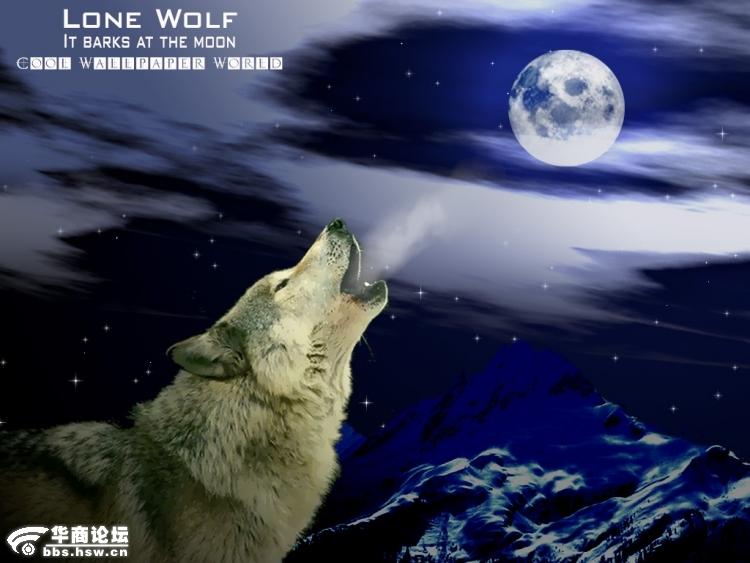 孤狼啸月高清壁纸桌面,狼啸月电脑桌面壁纸,狼啸月壁纸,桌面高清图片