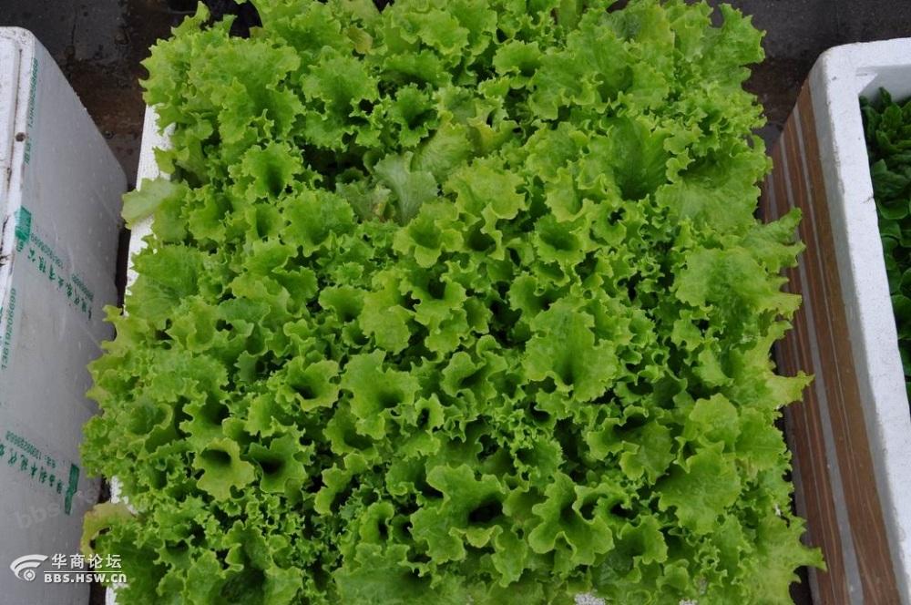 阳台方便.   乐趣一是:咱便在楼顶上种上了菜,别看种的不多,
