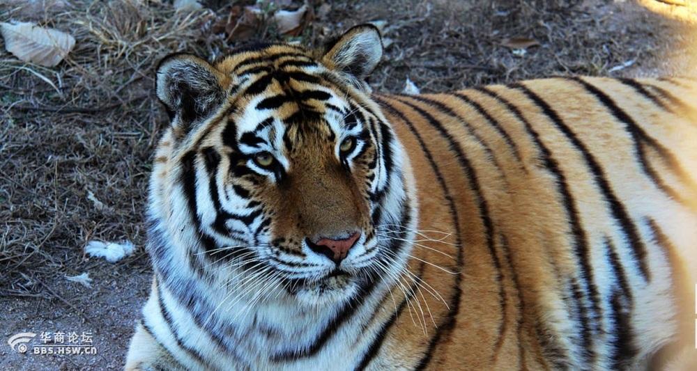 冬季,动物园里的动物不是冬眠就是呆在屋里不出来